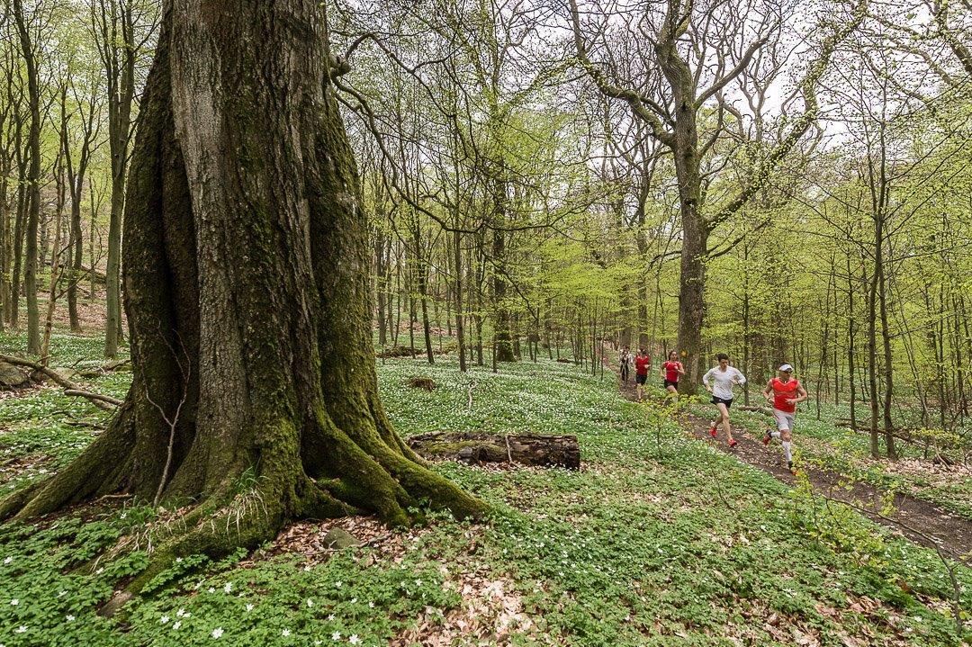 Traillöpare i skogen i Kullaberg