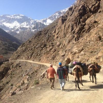 Möte med mulåsnor på trailresa i Marocko