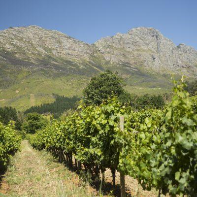TNT Sydafrika0314