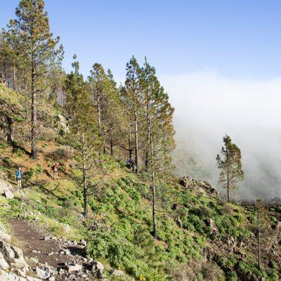 Gran Canaria TNT0008